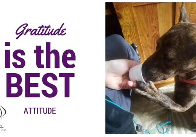 Gratitude Is The Best Attitude!
