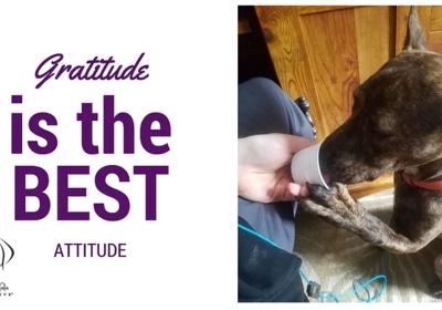 Gratitude Is The Best Attitude!