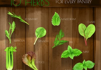 10 Must Have Herbs