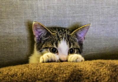 kitten moment