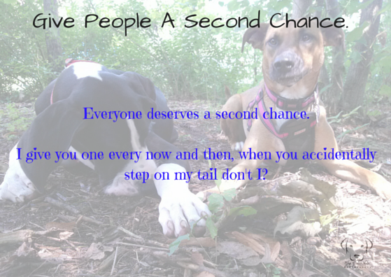 essay on everybody deserves a second chance Everyone deserves a second chance, right you fail your driver's test don't you  get another shot at it you do poorly on the sat's you can take.